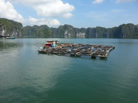 Floating fish farm in Lan Ha Bay