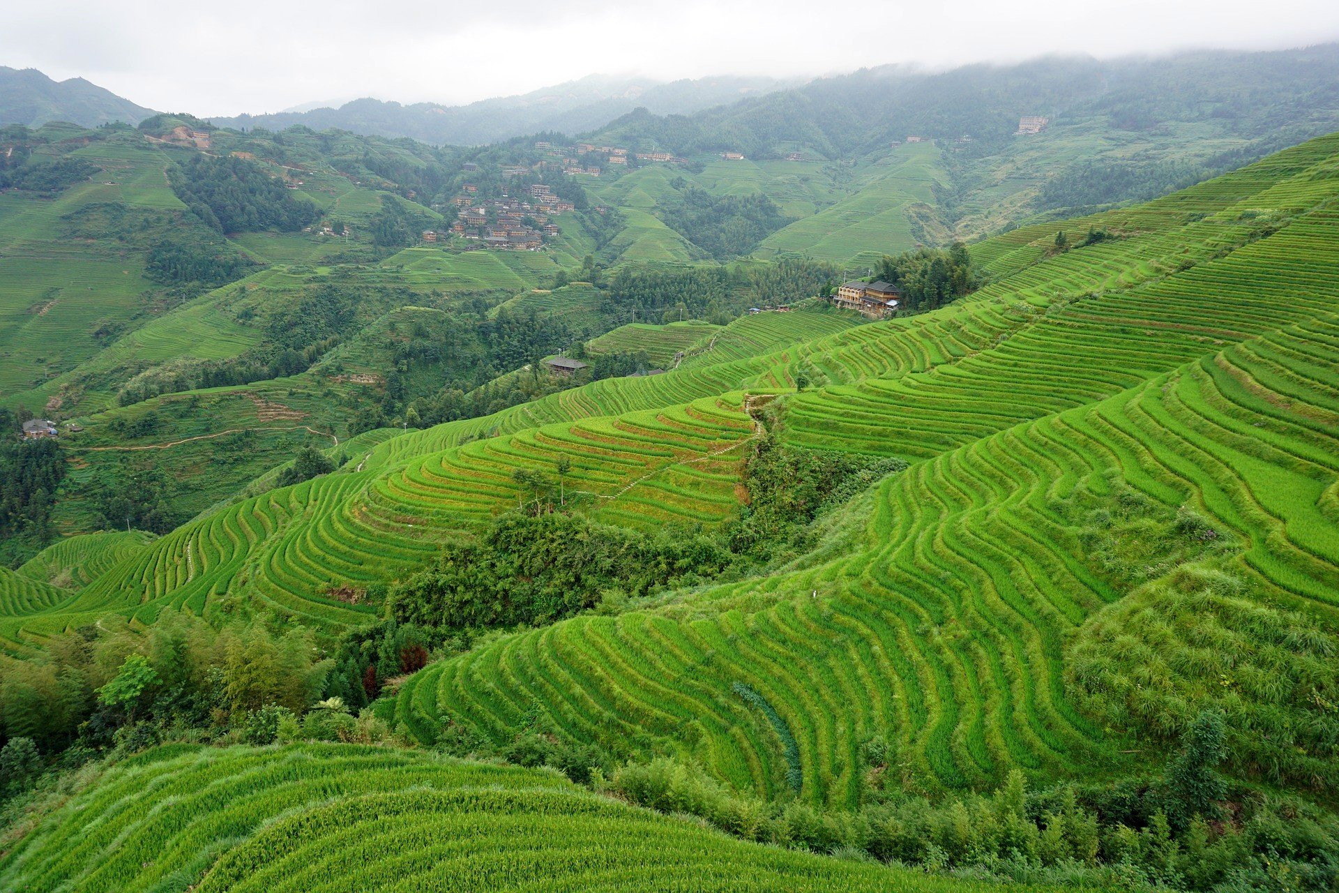 Longsheng Rice Terraces in the Guangxi Autonomous Region