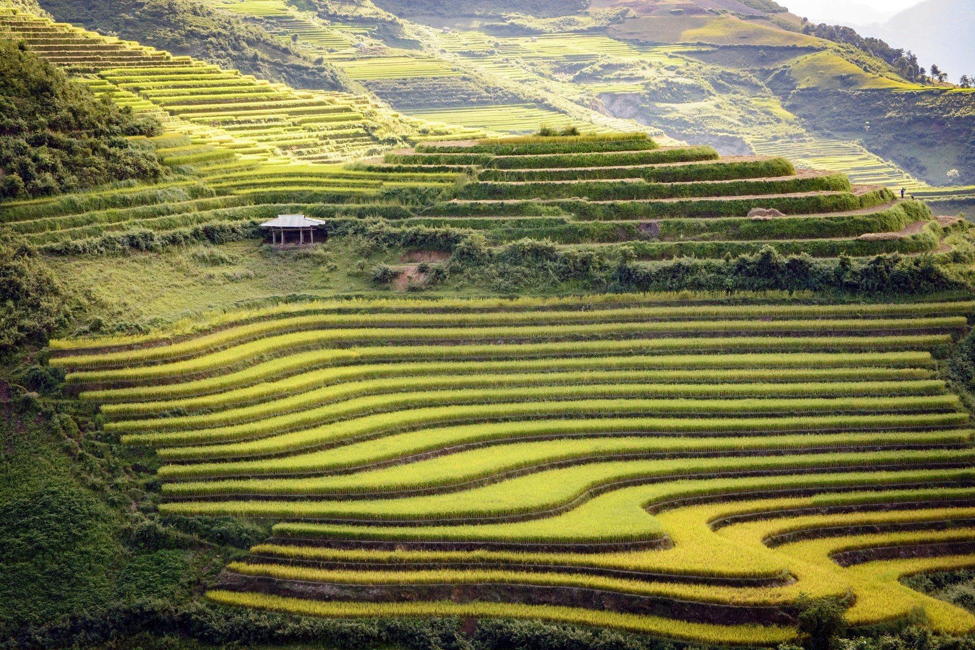 Rice terraces in Dien Bien