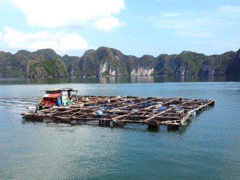 Lan Ha Bay near Cat Ba Island